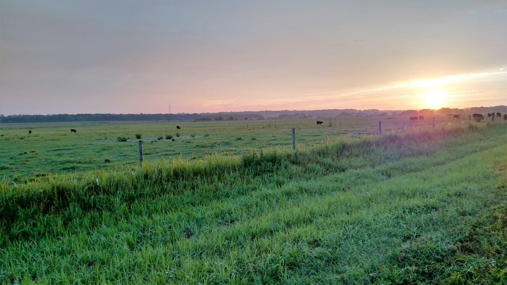SCR-pasture-1024x576